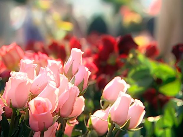 Цветы для коллег