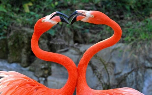 День Святого Валентина в зоопарке