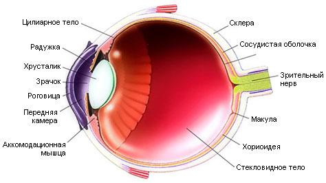 Методы коррекции зрения