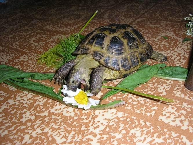 Как ухаживать за черепахами правильно